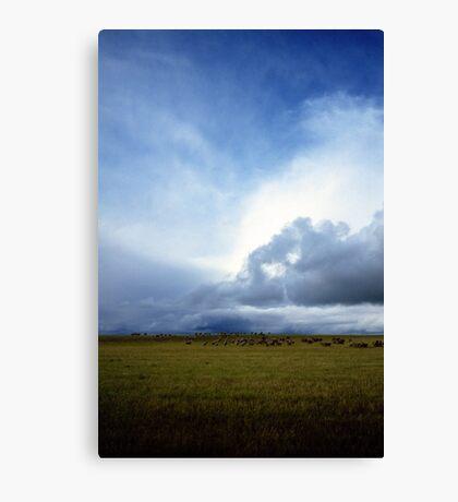 Coming Rain, Mallee 2 Canvas Print
