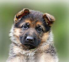 Puppy Portrait by Sandy Keeton