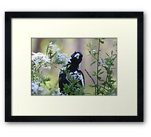 Can you see me! Framed Print
