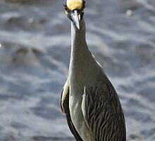 Night Heron, As Is by Kim McClain Gregal