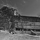 Old Barn - Cotton Farm, North Carolina by mrthink