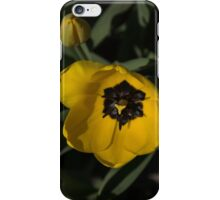 Sunny Yellow in the Shadows - a Cheerful Spring Tulip iPhone Case/Skin