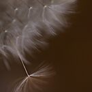 Dandelion Blur by Dianne English