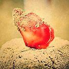 Sandy Seashell by ritawong