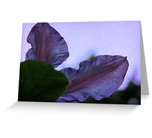Black Forest Morning Glory Greeting Card