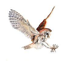 Barn Owl in Flight Photographic Print