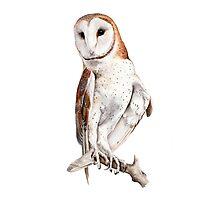 Barn Owl Watercolor Photographic Print
