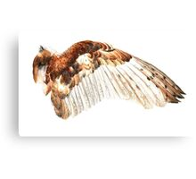 Barn Owl Wing Canvas Print