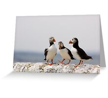 A Puffin Meeting Greeting Card