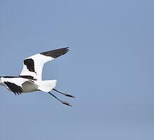 Flying away... by Hans Kool
