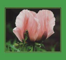 Pink Poppy Baby Tee