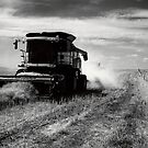 Canola Harvest, Coorong by Ty  Mickan