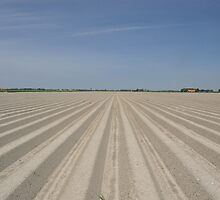 Raw Potato Field by Hans Kool