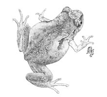 McDonald's Frog (ink detail) Photographic Print