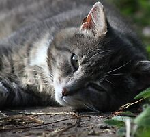 Resting cat by turniptowers