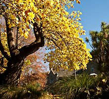 Autumn Tree - Christchurch by pennyswork