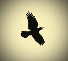 Crow by Nigel Bangert