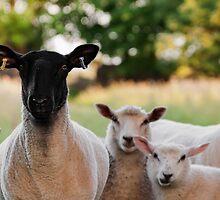 Who ewe looking at by cjsphoto