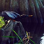 Anhinga on Lake Maitland in Winter Park, Florida by michaelBstone