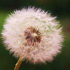 Make A Wish by Mounty