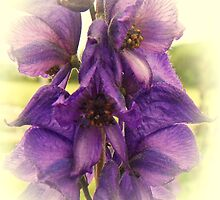 Canterbury Bell by sarnia2
