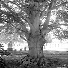 Tree at Evergreen Cemetery by Debbie Robbins