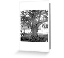 Tree at Evergreen Cemetery Greeting Card