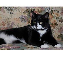 Victorian Kitty Photographic Print