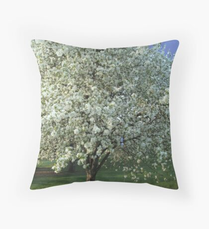 Apple Tree Dressed in White Throw Pillow