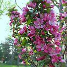 Pink Branch by Linda Miller Gesualdo