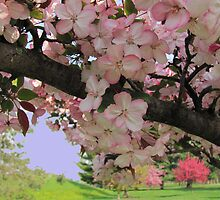 Blossoms In Pink by Linda Miller Gesualdo