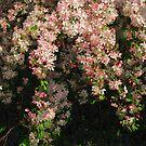 Blushing Flowers by Linda Miller Gesualdo