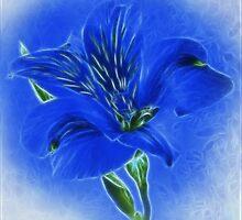 ~ Blue Lily ~ by Brenda Boisvert
