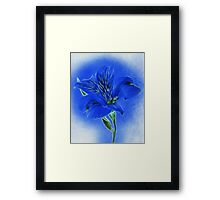~ Blue Lily ~ Framed Print