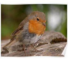 Precious Little Robin Poster