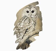 Barred Owl Bw Sepia Kids Clothes
