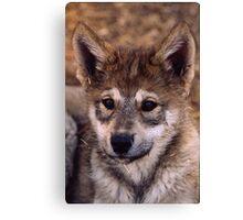 Alaskan Timber Wolf Cub Canvas Print