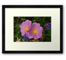 Prairie Rose Framed Print