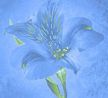 ~ Blue Lily 1 ~ by Brenda Boisvert