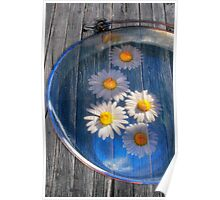 Daisies and water Poster