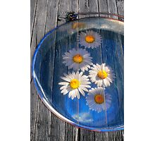 Daisies and water Photographic Print