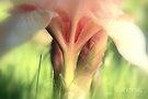 Iris by aMOONy