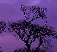 Purple Sky by DeePhoto