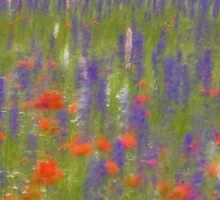 Breezy Meadow Flowers by karenmessick