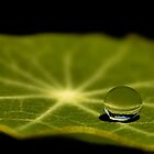 just one droplet by Ingz
