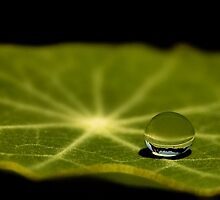 just one droplet by Ingrid Beddoes