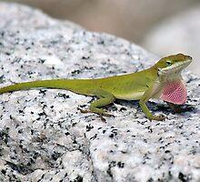Lizard by Paulette1021