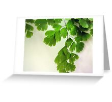Delicate Fern Greeting Card