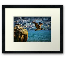 Where Do You think He's Going? Framed Print