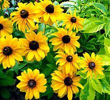 """The Honey Bee's Paradise"" by franticflagwave"